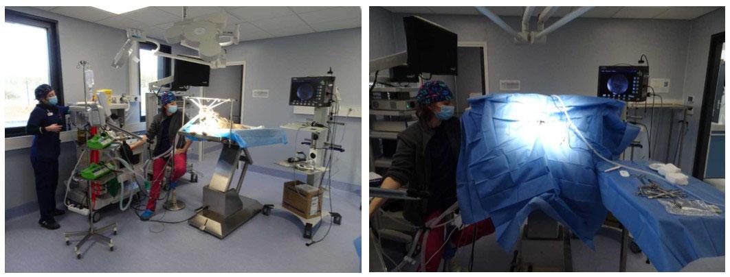 Préparation du patient pour la chirurgie